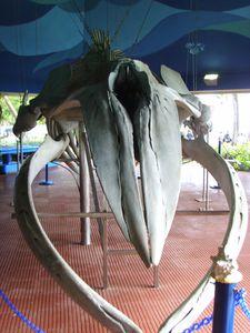 Aquarium Santo Domingo