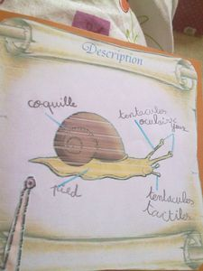 lap-book-escargot-008.jpg