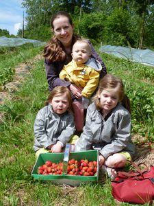 cueillette de fraises (1)