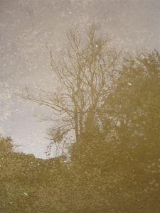 Reved-arbre.jpg