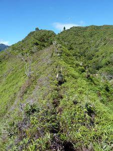 Tahiti-Piton Pirae-14-15 juillet-2011-Rava sur crête anuhe