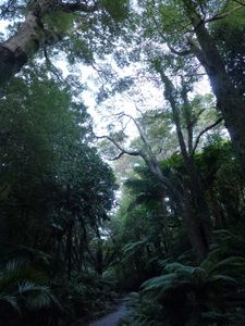 Wellington-11-15 mai 2014-botanical garden forest