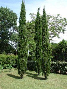 arbre-22-.jpg