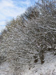 neige10
