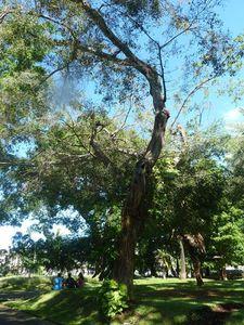 arbre JE de l'intendant b
