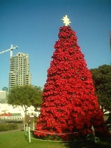 Seaport-Village-Poinsettia-Tree.JPG