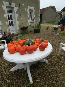 Courges-J-J--2.JPG