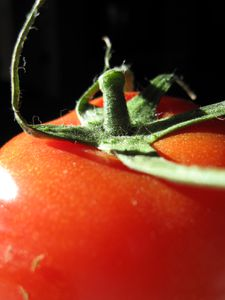 Tomate (6)