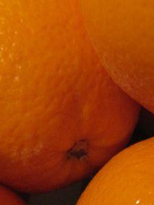 Oranges--2-.JPG