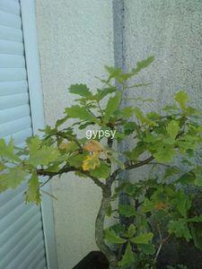 Copie-de-P200811_09.140001-copie-1.JPG