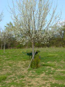 Photo-arbre-001.jpg