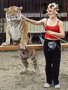 Tigre-cirque-03.jpg