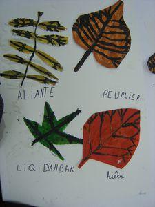 feuilles (7)