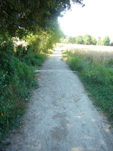 chemin bordé de champs de blé