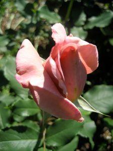 Fleurs-4328.jpg
