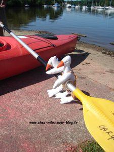 oies sur le kayack07