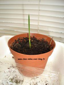 plantes 2011 01