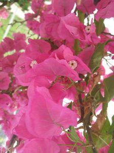 fleurs-7528.jpg