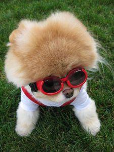 boo-lunettes-chien-le-plus-mignon