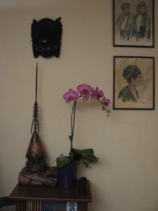 2011.01.11 Orchidée Claude0