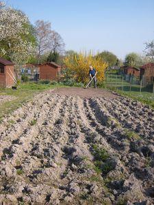 Au boulot le blog de le jardin de - Repiquer des framboisiers ...