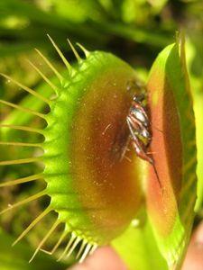 insectedionee.jpg