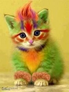 chat couleur