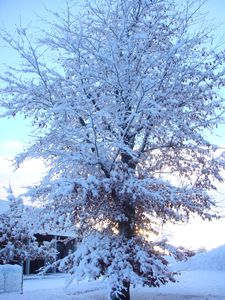 arbre blanc 2