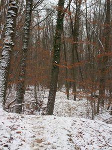 La forêt sous la neige2