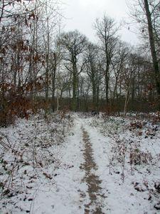 La forêt sous la neige9