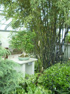 jardin botanique 15-05-11 (64)