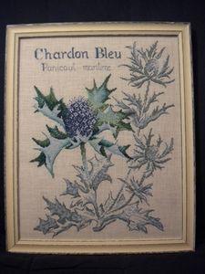 chardon-bleu-5.jpg