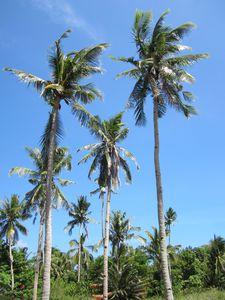 Philippines 7615