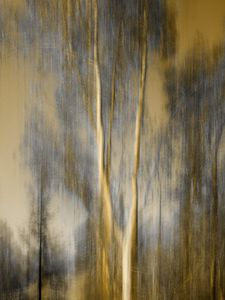 images-monsoon-composited-image-of-trees.jpg