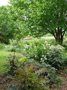 jardin-d-ombre-darbonnay.JPG