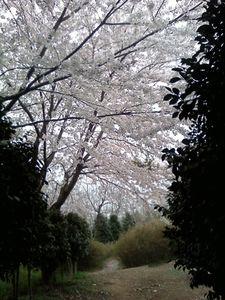 Photo120413_004.jpg