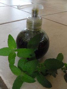 shampooing menthe- ortie 001