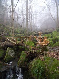 11.3.12-Sasbachwalden-16.jpg