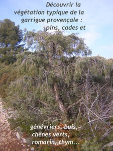 Vegetation-typique-de-la-garrigue.JPG