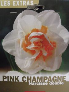 1- Pink Champagne