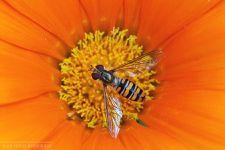 Insectes (02.10.2012) © Olivier Roberjot (01)