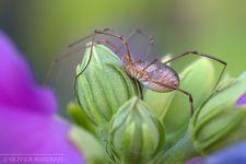 Insectes (02.10.2012) © Olivier Roberjot (10)