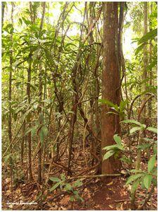 Amazonie EcoPark 19