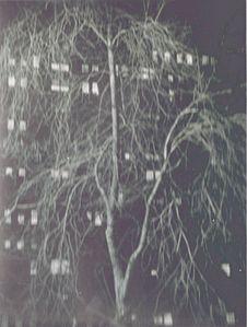 KERTESZ-New-York-1958-arbre.jpg