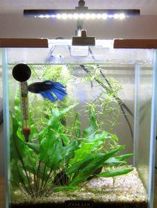 Petit guide du d butant le blog de stephane r - Quel poisson choisir pour un petit aquarium ...
