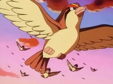 800px-Ash_Pidgeot_released.png