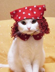 chat%20comique%20deguisement%20pirate