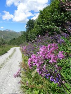 Chemin-fleuri