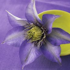catherine-beyler-clematis-and-bowl.jpg