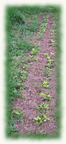 fleurs-26-3-2011-2.JPG